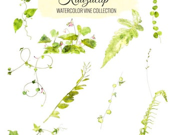 Watercolor Vine Collection