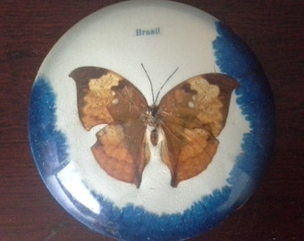 butterfly paper weight from brazil
