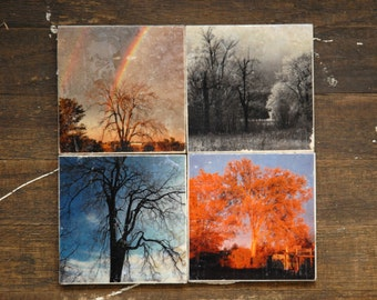 Seasonal Trees Tile Coasters - Set of 4 // Trees // Canada // Photography // Foliage // Springtime // Fall // Seasons // Rainbow