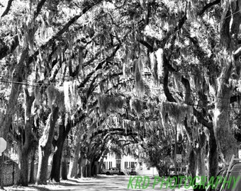 Magnolia Avenue, St Augustine