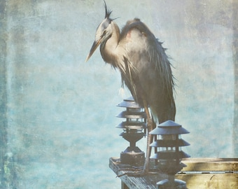 2 Great Blue Heron photos, Beautiful photos of a Great Blue Heron enjoying a lazy day by the dock. Water, wood , browns, grays, print, Blue.
