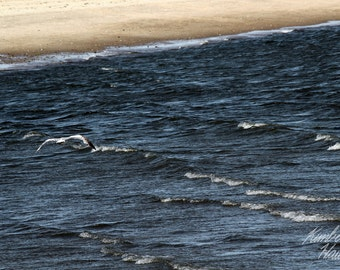 Photography, Beach, Seagull Over Waves