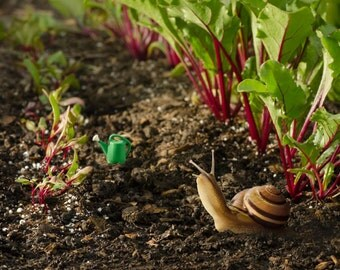 "Snail photography 8x10 whimsical animal art print titled ""Snail's Garden""."