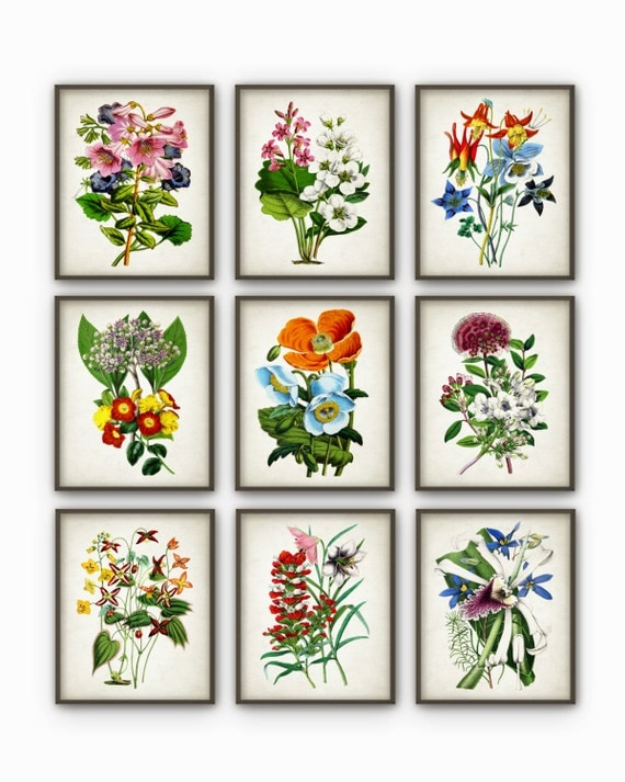 Flowers Print Set of 9 - Vintage Botanical Home Decor - Antique Book Plate Illustration - Giclee Flower Picture - Flower Print - AB67