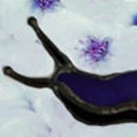 Purpleslug
