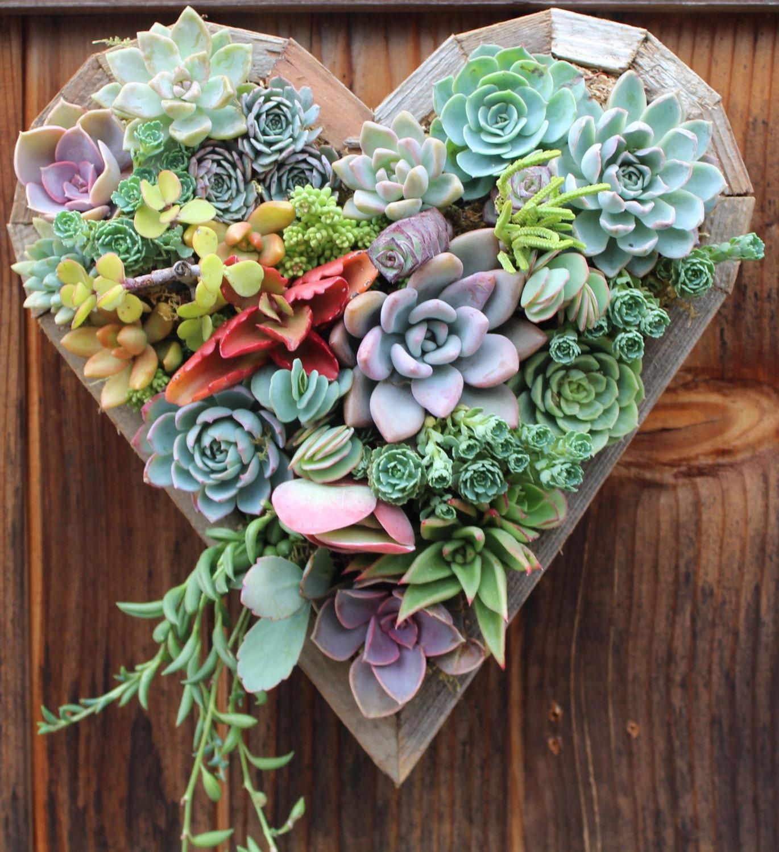 Medium Hanging Heart Succulent Vertical Garden