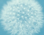 Dandelion photography abstract art, blue and white gallery wall art print nursery decor, fine art nature botanical picture dandelion artwork