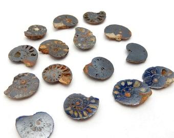 Hematite Ammonite Fossil -- (RK1B2-03)