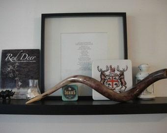 Polished kudu horn - Antelope Horn - Kudu Antler