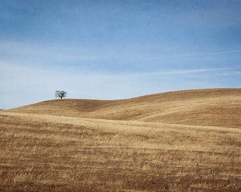 California Landscape Photography, Santa Ynez Valley, Golden Brown Wall Art, Minimalist landscape Art, Photographic Print - Golden Ynez