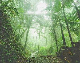 Nature photography. nature wall decor. landscape fine art print. rainforest. rainforest photography. green decor. El Yunque.