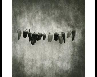 Peppers. Silver gelatin darkroom print