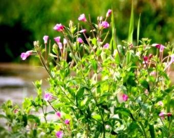 Nature Photography, Wildflowers, Rustic Decor, Summer Art, Shabby Chic, Romantic Art, Nature Photo, Dreamy Wall Decor - Dreamy Wild Flowers