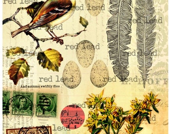 "Digital Bird Collage Sheet - 8-1/2"" x 11"" - Bird 40"