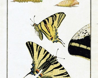 Butterfly Yellow Teal Green Instant Download You Print Digital Image 300 DPI