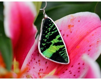 Real Butterfly Wing Necklace. Green Sunset Moth.