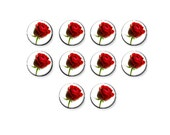Glass Cabs, Glass Cabochon, Red Rose Flower, Love Romantic, Cabochon Lot, Glass Dome, Earrings, 8mm 12mm 16mm 20mm, C1339