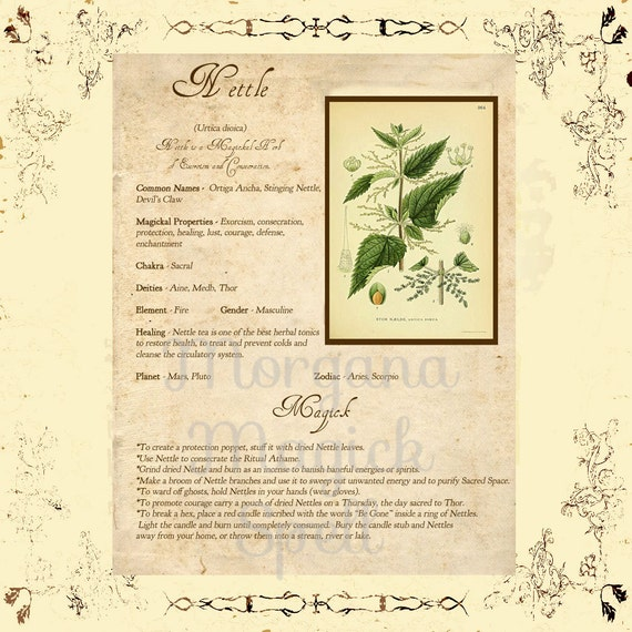 Herb Grimoire Magickal Correspondences of Herbs - induced info