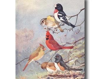 """Cardinal Art, Bird Art Print (Vintage Bird Book Plate, Red Cardinal Bird) --- """"Cardinal, Grosbeak & Towhee"""" No. 73"""