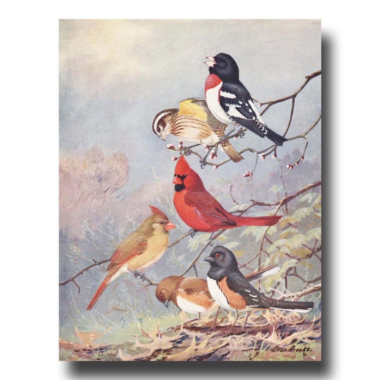 Vintage Cardinal 121