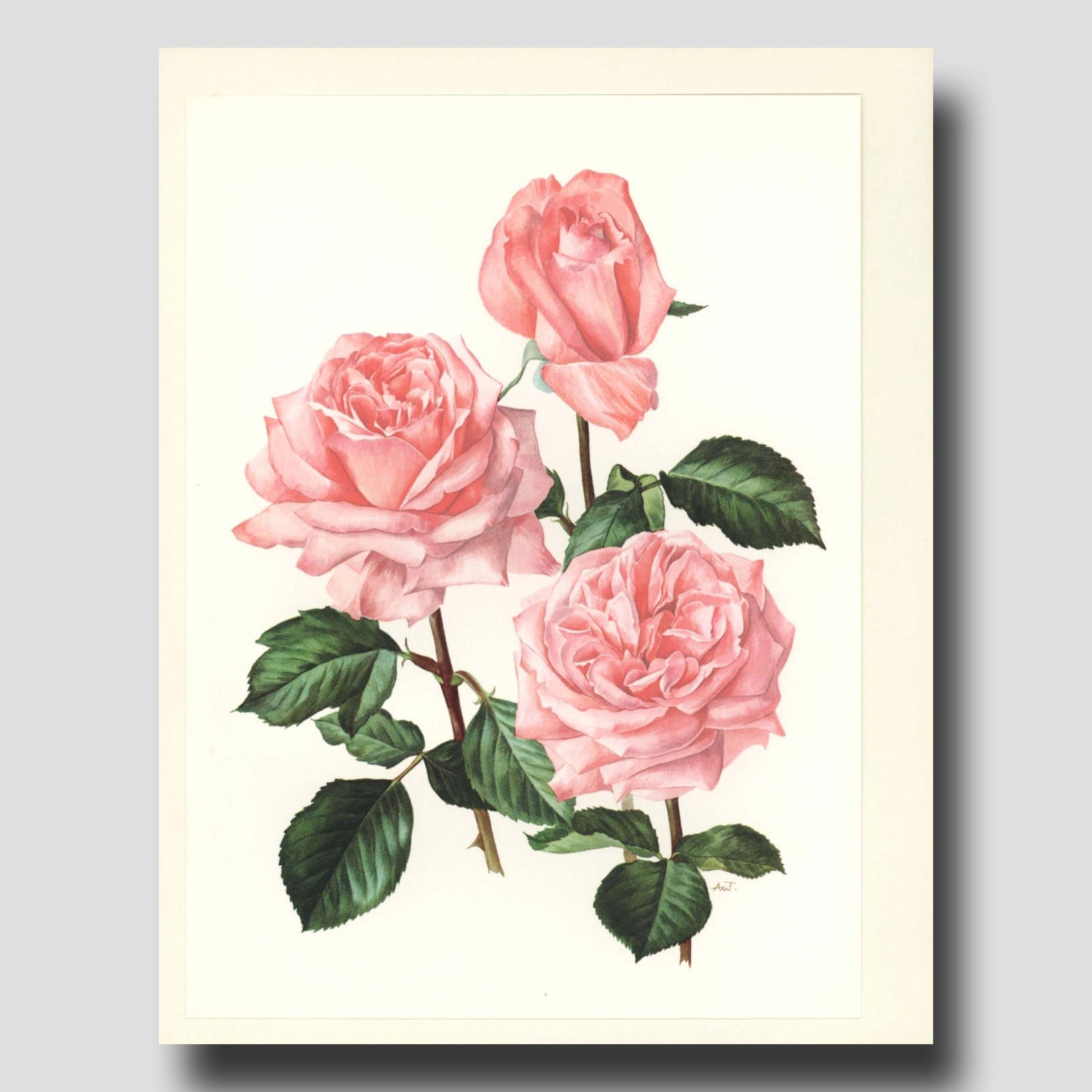 Cottage Decor Pink Rose Wall Hanging By Paragonvintageprints