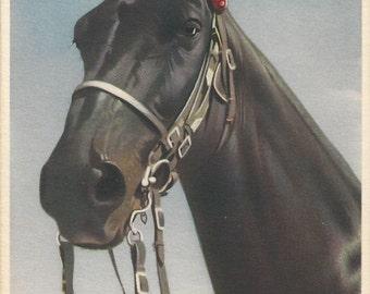 Jet Black Bridled - Vintage 1940s Alfred Mainzer Real Horse Photochrome Postcard
