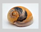 Beach House Decor, Shell Sea Snail Yellow Black Nature, Bathroom Decor, Original Photograph, Fine Art Photography matted & signed 5x7 print