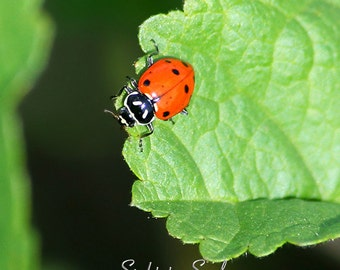 Red Ladybug Art, nature photography, nursery wall decor, macro insect photography, red and green lady bug photo, fine art print