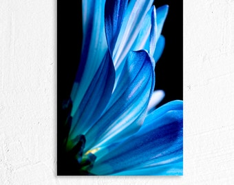Blue Daisy Macro Shot Floral Photography