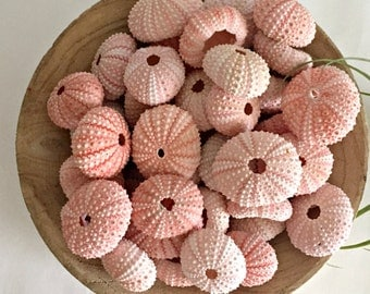 "Sale! Set of 50 pink  Sea Urchins (1.25"" to 1.50"") - Beach Wedding Decor - DIY projects- Air Plant Shell magnets- supplies"