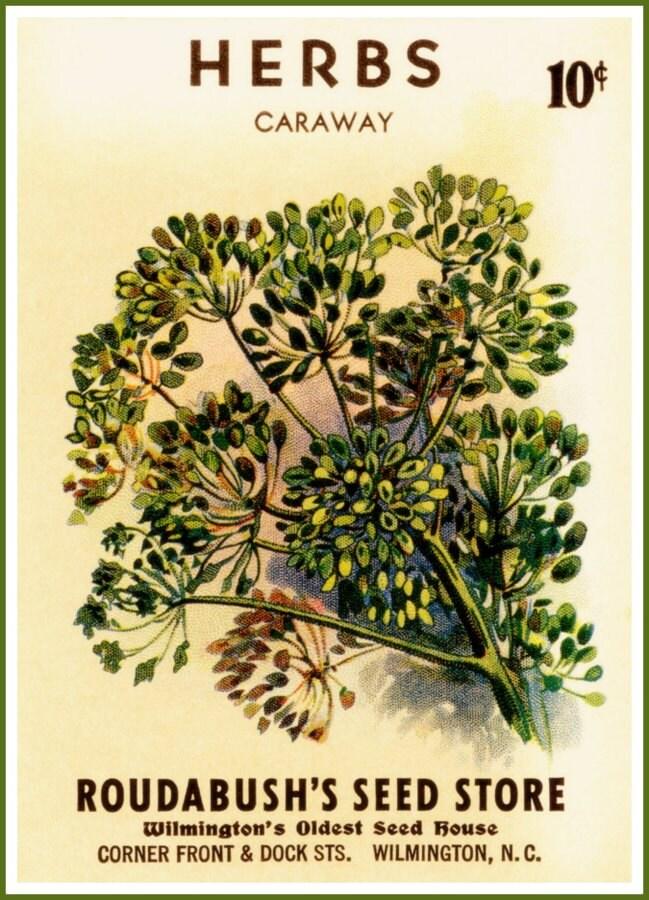 kitchen caraway seeds roudabush seed store wilmington n