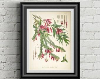 Botanical poster. Botanical art print. Wall art print. Vintage botanical prints. Flower illustration print Antique botanical print Blueberry