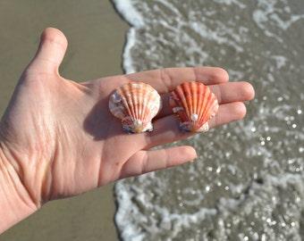 Seashell Earrings-mermaid earrings Colorful earrings mermaid accessories