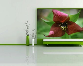 Purple Trillium Photograph, Fine art print, spring flower macro photography, 18x24
