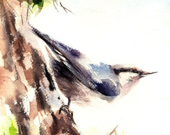 Bird Original Watercolor Painting, Nuthatch Bird Painting, Bird Watercolour Art