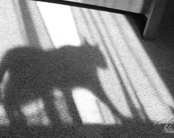 Photography, Black and White, Cat Shadow