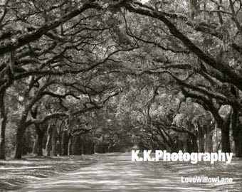 Oak Avenue, Wormsloe Plantation Photograph (B&W, Framed and Matted)