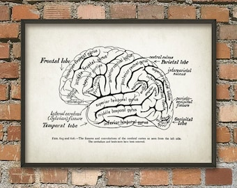 Brain Anatomy Print - Cognitive - Computational - Neuroscience - Neurolinguistics Wall Art Poster - Human Brain Anatomy Science Poster