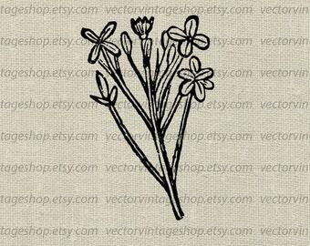 Flower Sprig Vector Clipart Floral Graphic Art Commercial Use Victorian Nature Botanical Art Illustration Instant Download WEB1705BL
