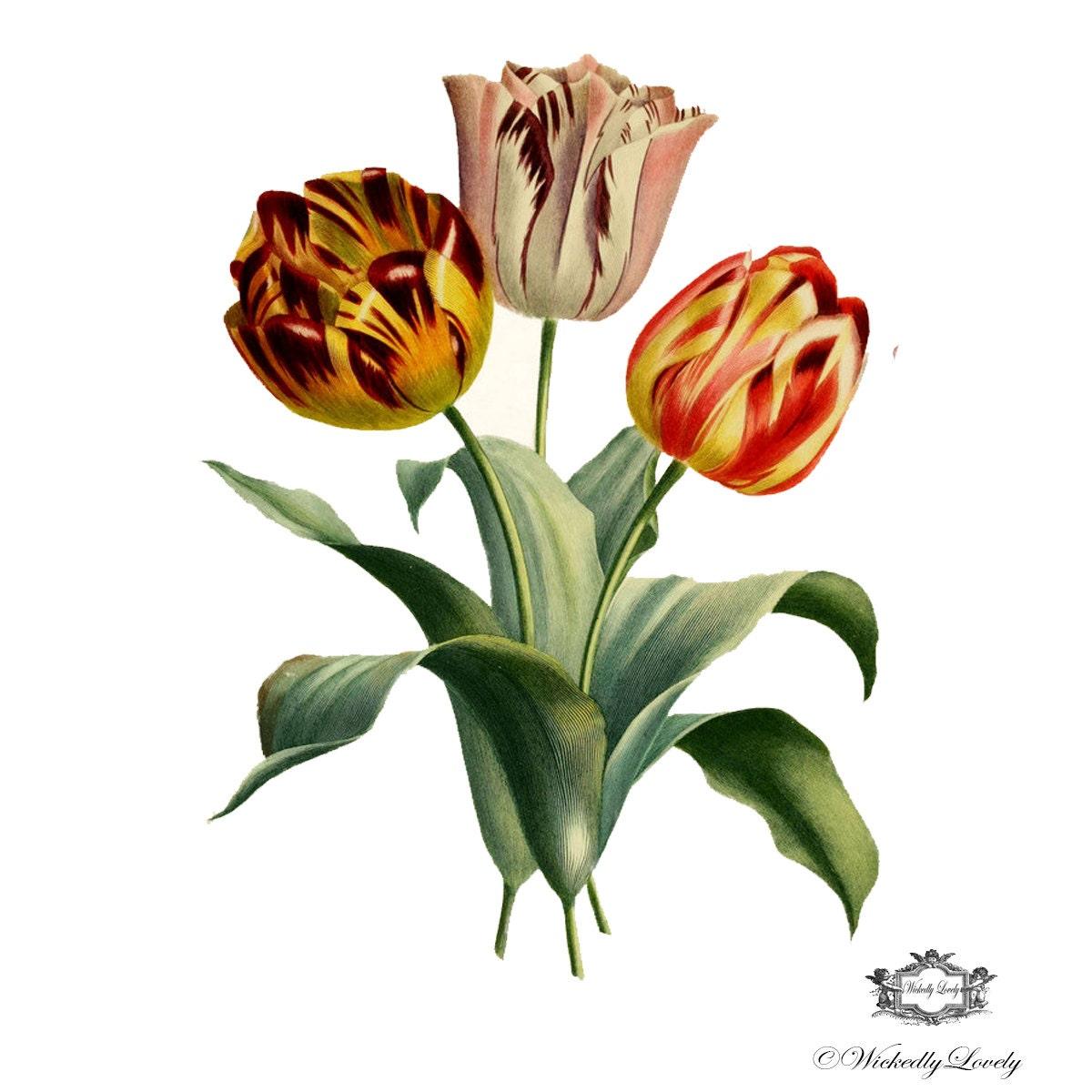 Vintage Tulips 118