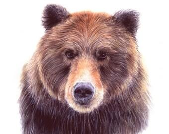 art prints - bear illustration - bear art - nursery art prints  - bear  - woodland creatures - 8.5 x 11 inch