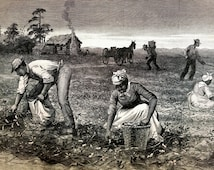 Black Americana Cotton Goober Pickers Plantation Work Negroes Slavery 1890  - Horace Bradley Professionally Matted Engraving Ready to Frame