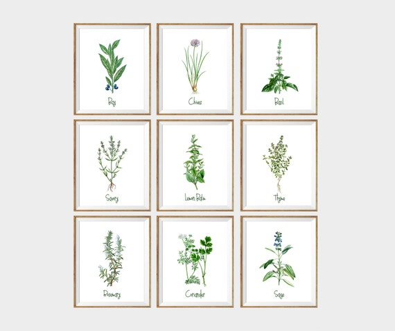 Kitchen Art Herbs: Culinary Herbs Art Print SET Of 9. Kitchen By AntiqueWallDecor