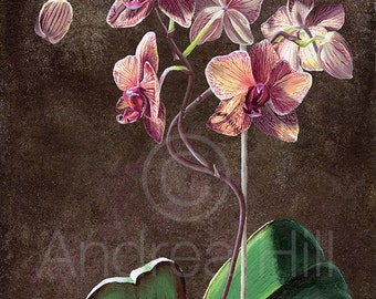Kaleidoscope Phalenopsis Orchid Limited Edition Giclee Print of Acrylic Painting