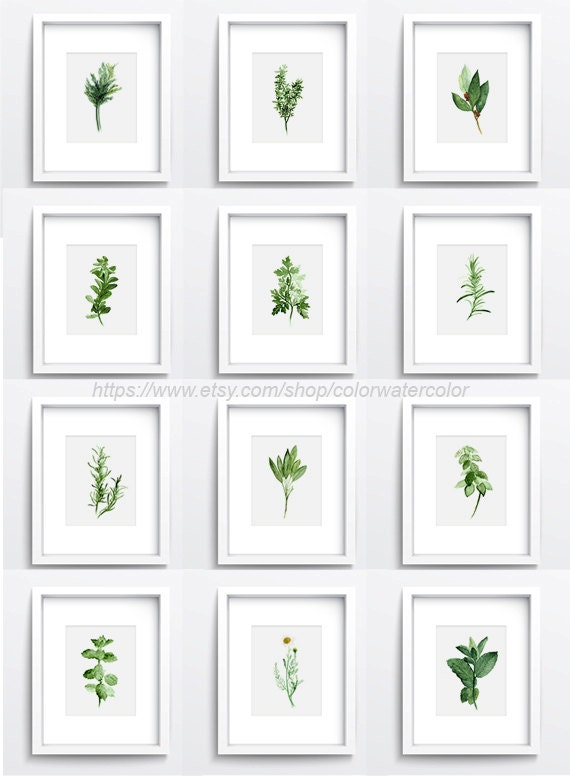 Wall Decor For Kitchen herbs chart set of 12 spices wall decor kitchen art print