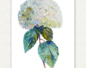 White Hydrangea Original Watercolor Painting 11x14 White Flower Art by Janet Zeh