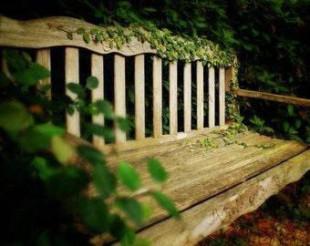 Whimsical Photography - Wood Bench - Fantasy, Secret Garden, Nature Photography, Vivid, Green