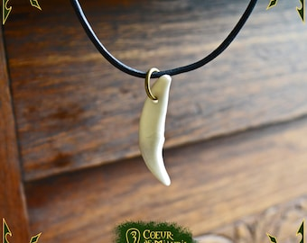 Necklace coyote tooth pendant