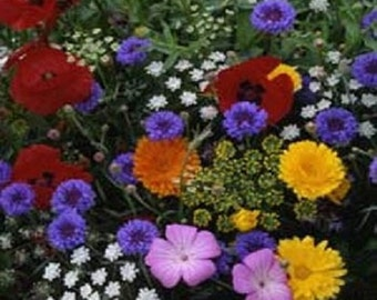 250 Seeds Tall Annual Cut Flower Mix