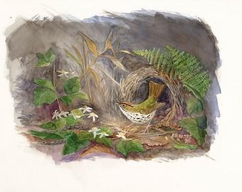Ovenbird and Wild Clematis